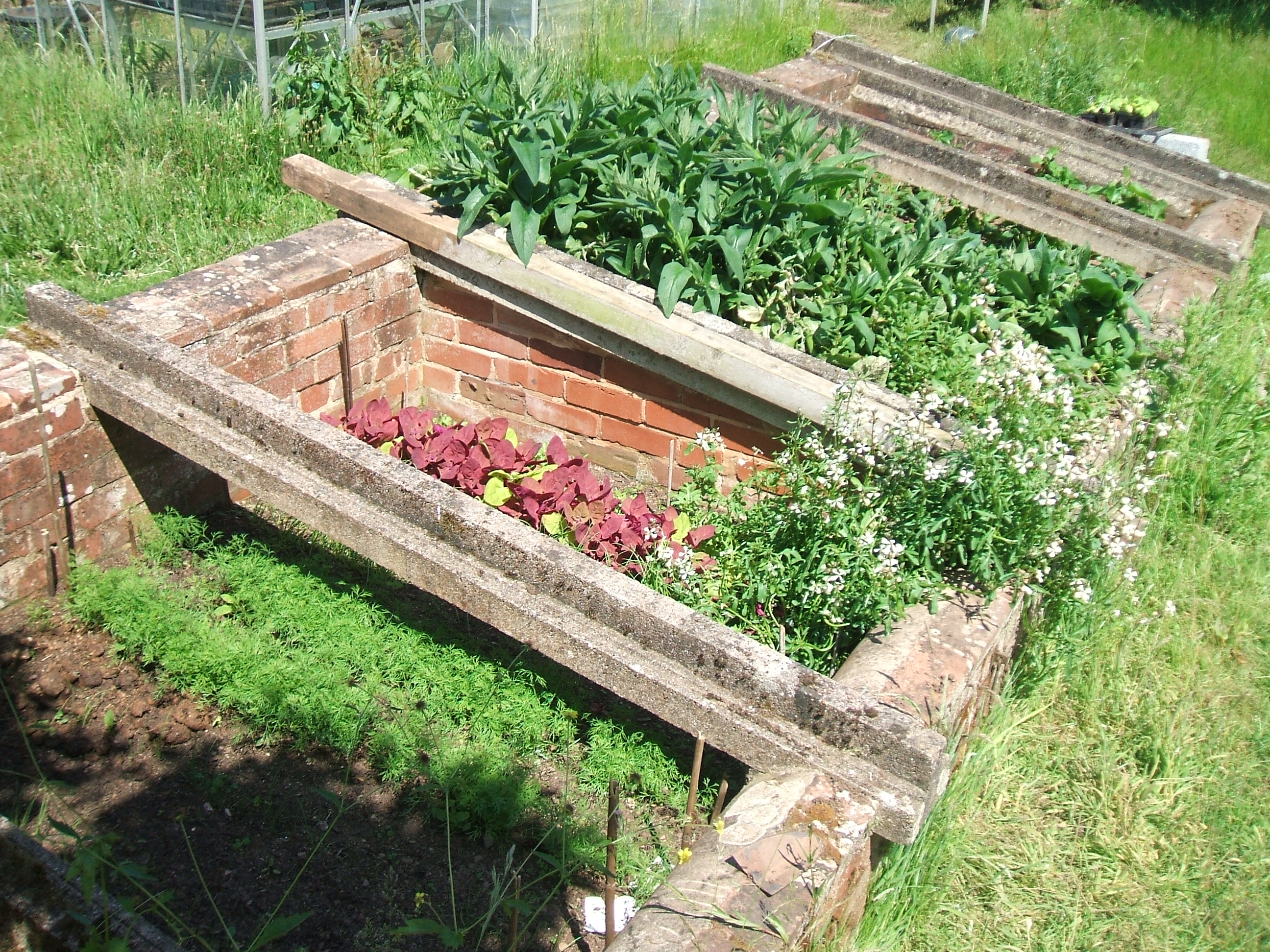 Walled Kitchen Gardens Healthy Kitchen Garden July Week 1 Bobbys Healthy Blog