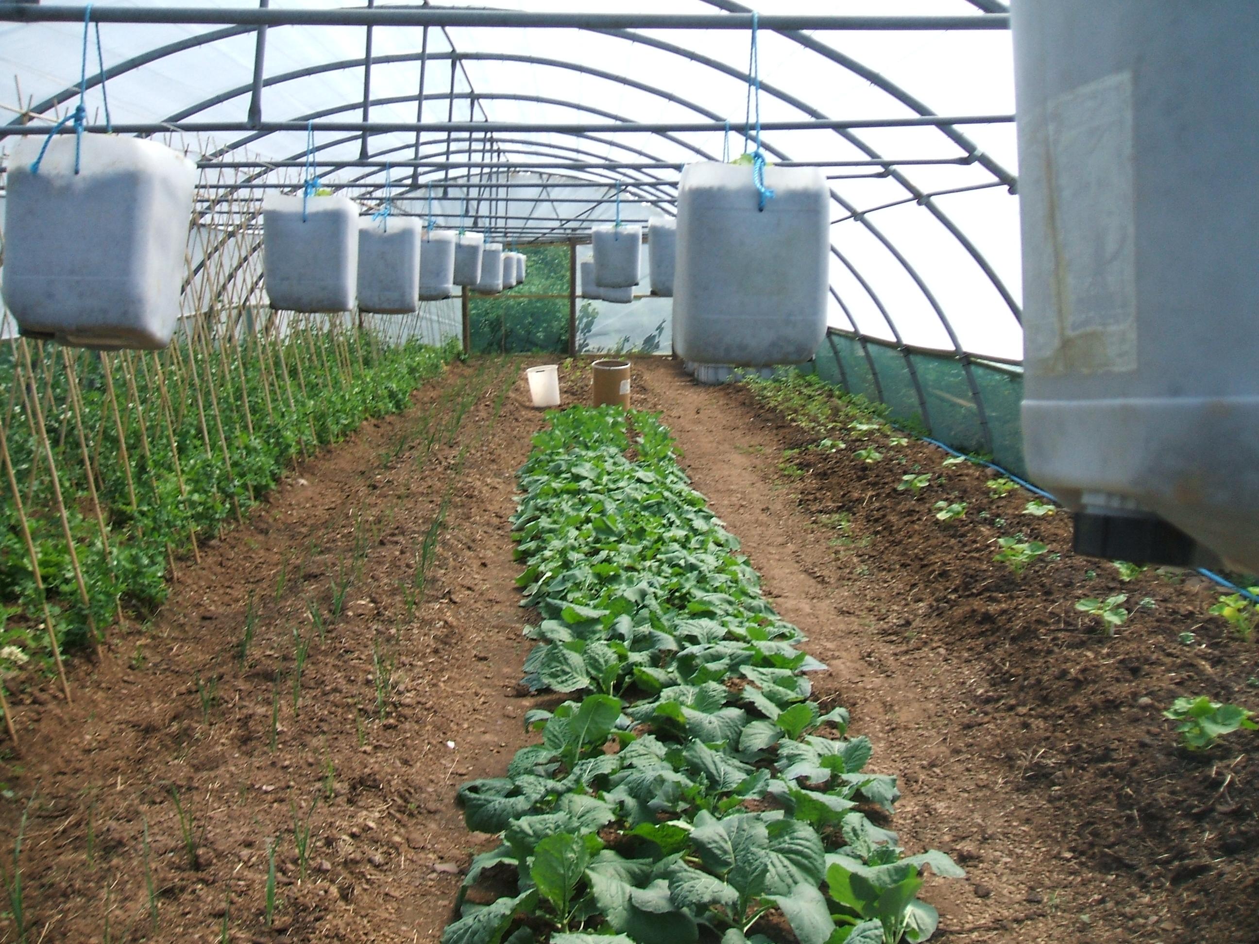 Kitchen Garden Blog Healthy Kitchen Garden July Week 1 Bobbys Healthy Blog